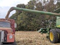 Estate-Wheat-Harvest-2019