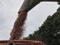 Estate-Wheat-Harvest-3-2019