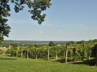 french-lick-winery155