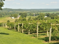 french-lick-winery166