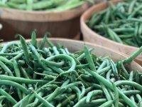 aug2020-green-beans