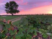 aug2020-purple-sunset-jessica-Schmidt-1