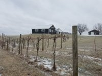 Winery-with-vines-little-snow-on-ground