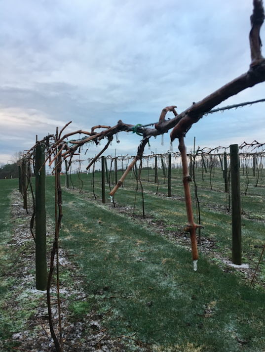 Vineyard | Indiana Uplands Wine Trail